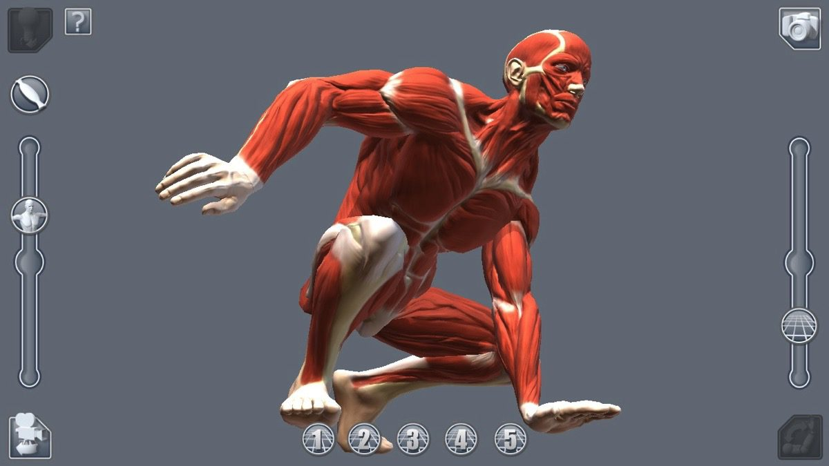 artpose_muscles_1200px